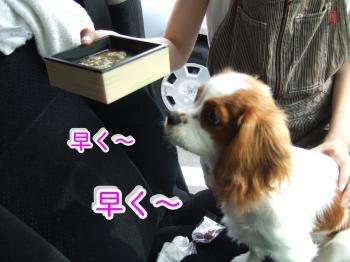 himawari29_convert_20090507203316.jpg