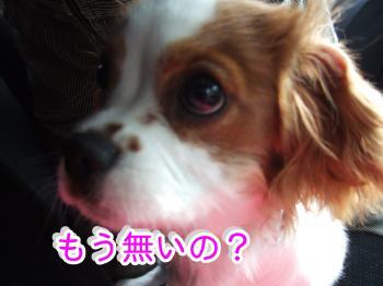 himawari31_convert_20090507203418.jpg