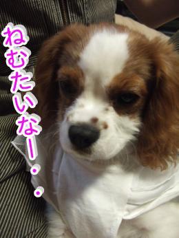 himawari33_convert_20090509214503.jpg