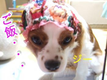 himawari37_convert_20090511222918.jpg