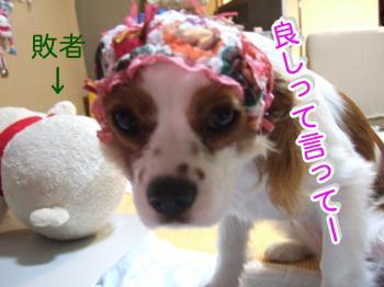 himawari38_convert_20090511222957.jpg