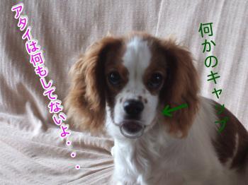 himawari43_convert_20090513195501.jpg
