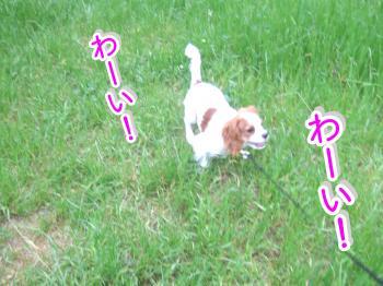 himawari49_convert_20090516214936.jpg