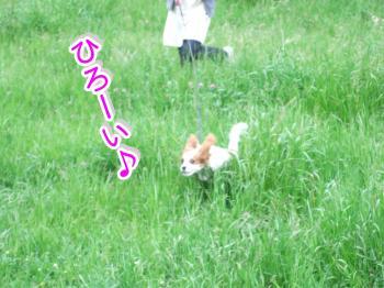 himawari50_convert_20090516215014.jpg