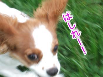 himawari52_convert_20090516215117.jpg