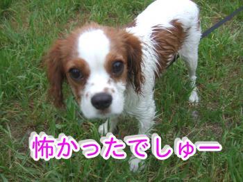 himawari56_convert_20090516223234.jpg