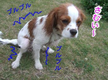 himawari57_convert_20090516223346.jpg