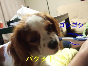 himawari64_convert_20090530194439.jpg