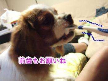 himawari65_convert_20090530194514.jpg