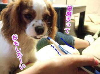 himawari66_convert_20090530194604.jpg