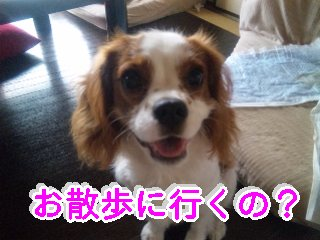 himawari72.jpg