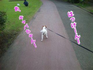 himawari73.jpg