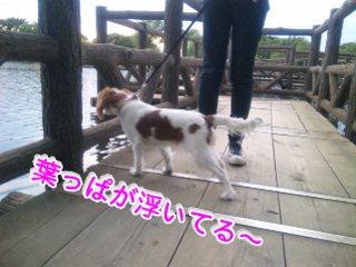 himawari77.jpg