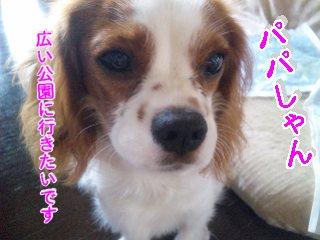 himawari78.jpg