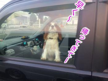 himawari79_convert_20090608201802.jpg