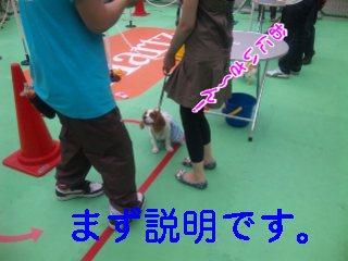 himawari85.jpg