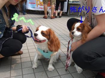 himawari88_convert_20090614221611.jpg