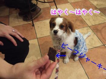 himawari89_convert_20090615235129.jpg