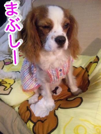 himawari90_convert_20090616215402.jpg