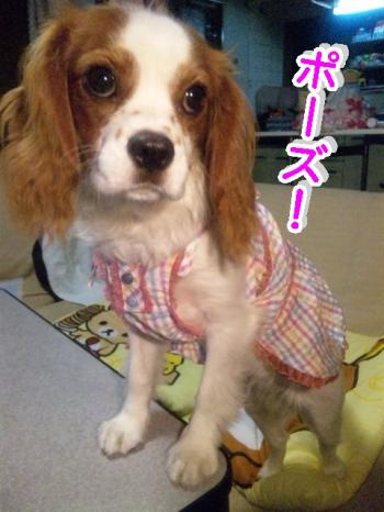 himawari91_convert_20090616215607.jpg