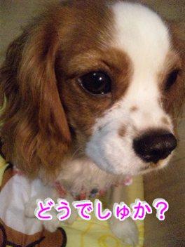 himawari92.jpg