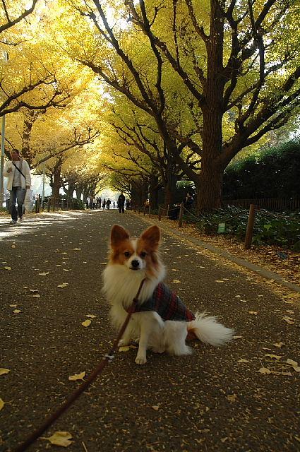 錦秋のお散歩~♪