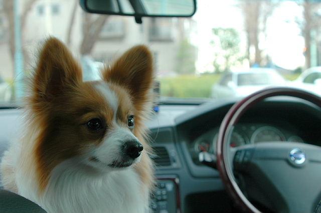 パパの車でお出かけ~♪