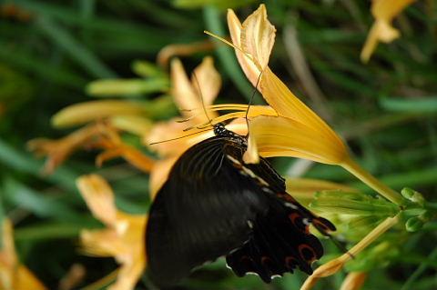 蝶々さんて顔が怖いんですって!小さくて分かんないね(^^ゞ