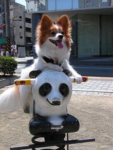 パンダにま~たがり♪