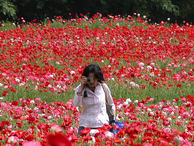 満開の花に包まれて