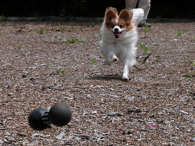 待ってよ~ボクのボール~