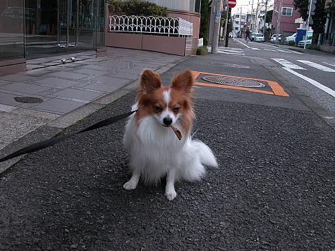 紋次郎かよ(^_^;