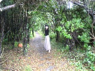 アリスの森