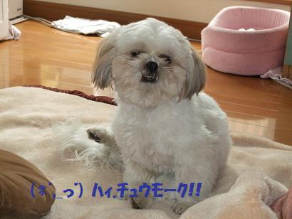 2008_040610012.jpg