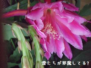 2008_051510009.jpg