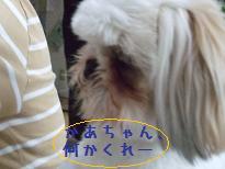 2008_051710009.jpg