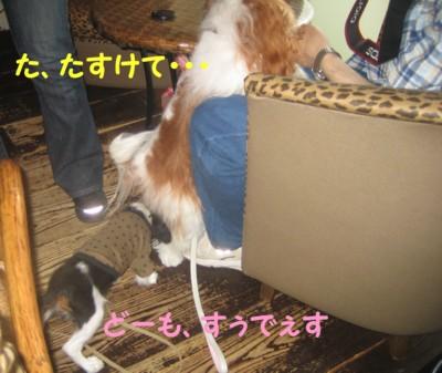 0IMG_6235.jpg