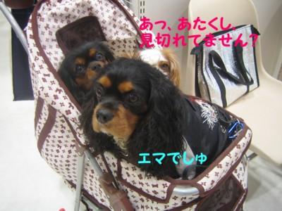 0IMG_7933.jpg