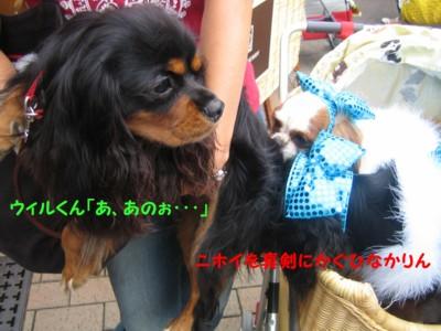 IMG_2484g.jpg