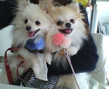 本日のベストショット!!超可愛いモアナちゃん&リノ君のツーッショットです(≧▽≦)