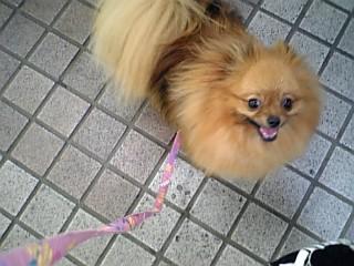 笑顔でお散歩~♪たまプラーザ駅にて♪