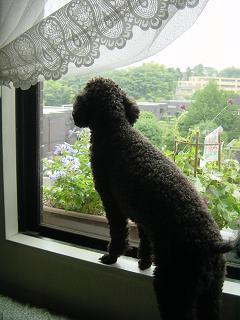 こうやって窓から外を見るのがタクは大好き!