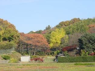 奈良川源流の農家の見事な紅葉