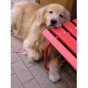 愛犬ラヴィン♂4歳
