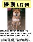 080902迷い犬を保護しています!