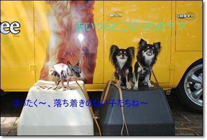 DSC_0130_01.jpg