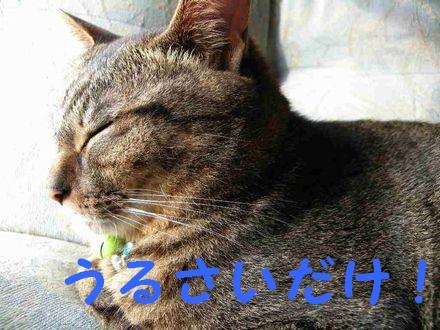 眠いんじゃ!