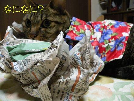 沖縄の情勢は。。。。