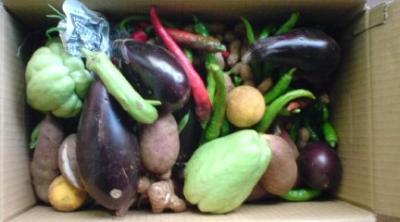 山田さんのお野菜