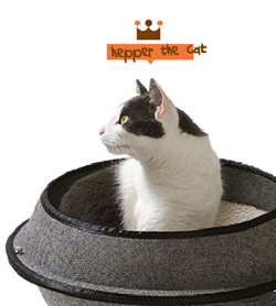 hepper_the_cat